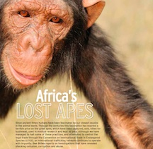 5. Lost apes