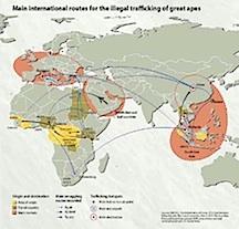 6. slave trade