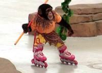 … or ride roller skates