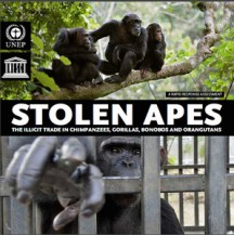 Stolen Apes_small