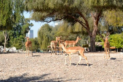 The Sheikh Butti Wildlife Centre is a well-managed private wildlife breeding centre.
