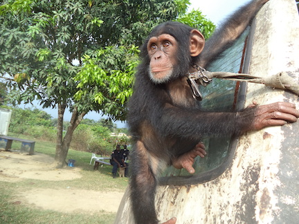 Jackson, renamed Guey, was living on an abandoned VW bus before rescue. (Photo: P. McKinney)