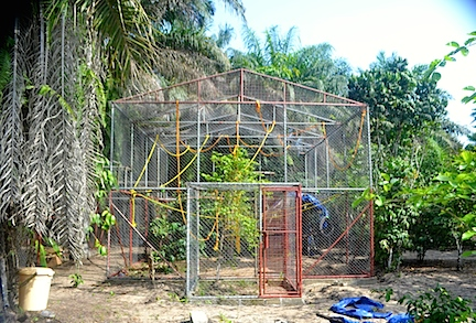 The chimpanzee enclosure at Libassa, fitted out with greenery, ropes and structures to climb and swing on. Sure beats being tied up to a rusty VW wreck. (Photos: D. Stiles)
