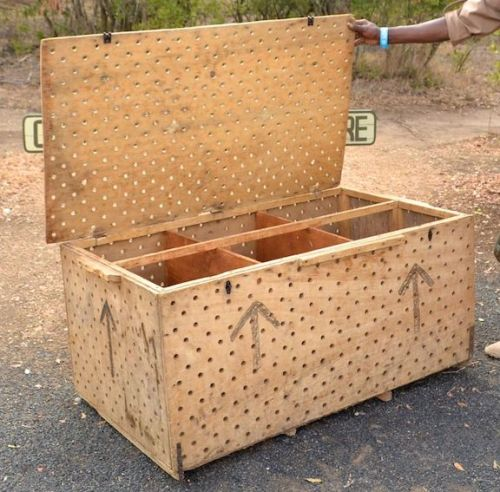 Great apes are shipped by air in crude boxes like this one. It is not uncommon for fatalities to occur during transport.