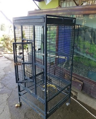 Manno's 'bird cage', where he spent his time being taunted by zoo visitors.