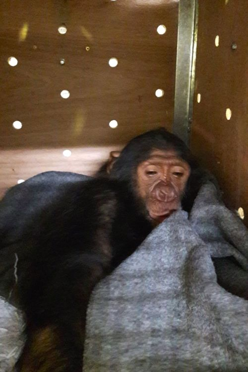Manno spent the first night in his crate in the Dubai airport, where he connected to the regular scheduled passenger flight to Nairobi the morning of 30 November.