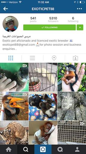 This Instagram account advertised hundreds of exotic species for sale, many CITES Appendix I, which prohibits such commercial trade.