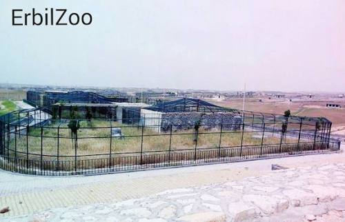 Erbil Zoo, where Manno first arrived from Syria, is nothing more than a concentration camp for exotic animals. Unfortunately, it is typical of most found in the region. (Erbil Zoo Facebook page)