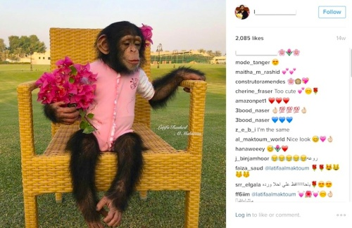 Instagram users show their approval of a post with emojis