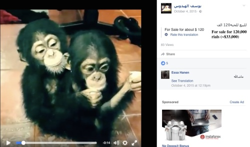 Some posts openly show the selling of great apes, even sometimes showing the prices