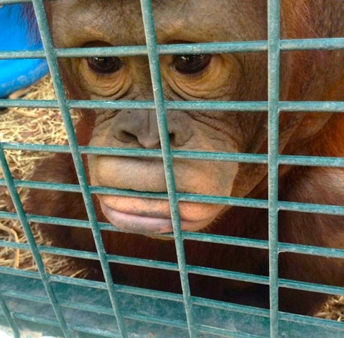 While others show where they end up - in cages