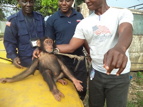 New Chimpanzee Sanctuary in Liberia | Project to End Great